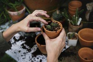 relevant-goal-gardening-planting-cacti-garden-goals--blog-caribmedia-aruba