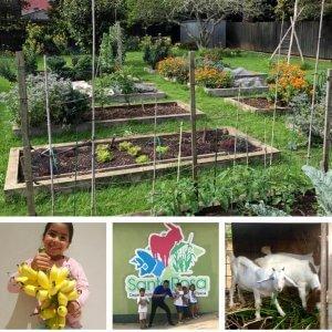 review-aruba-santa-rosa-agriculture-d-eco-friendly-business-caribmedia-blog